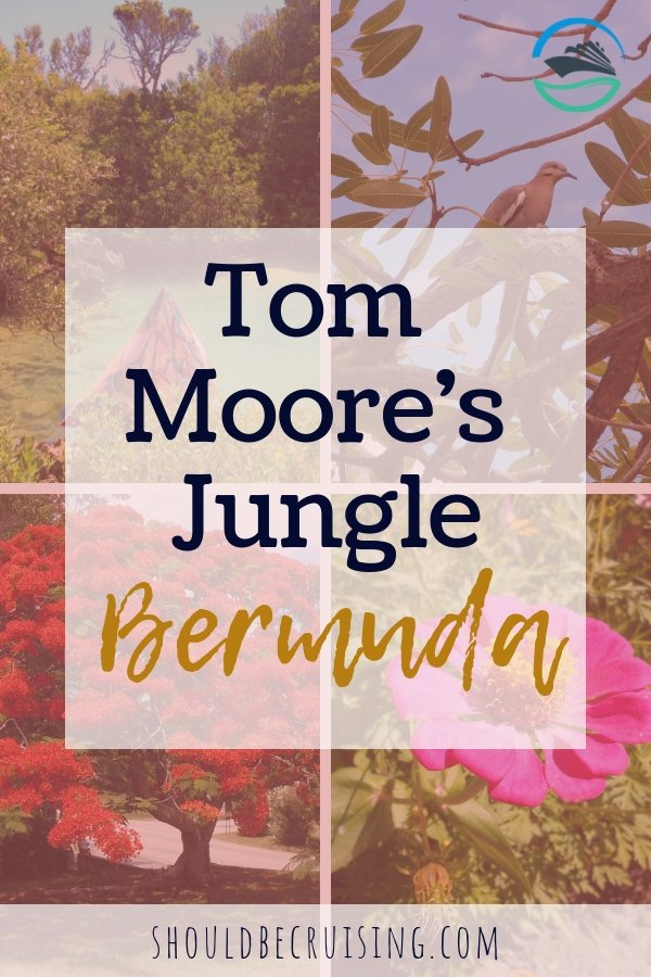 Tom Moore's Jungle Bermuda