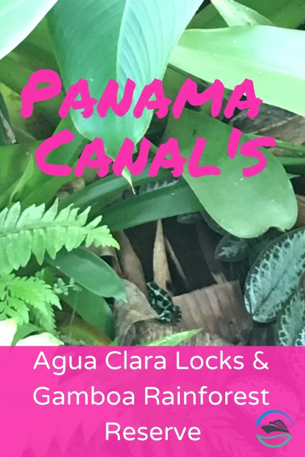 On the sixth day of our Panama Canal cruise, we finally made it to the Agua Clara Locks! We then visited the Gamboa Rainforest Reserve. #panamacanal #aguaclara #gamboa #gamboarainforest #caribbeanprincess