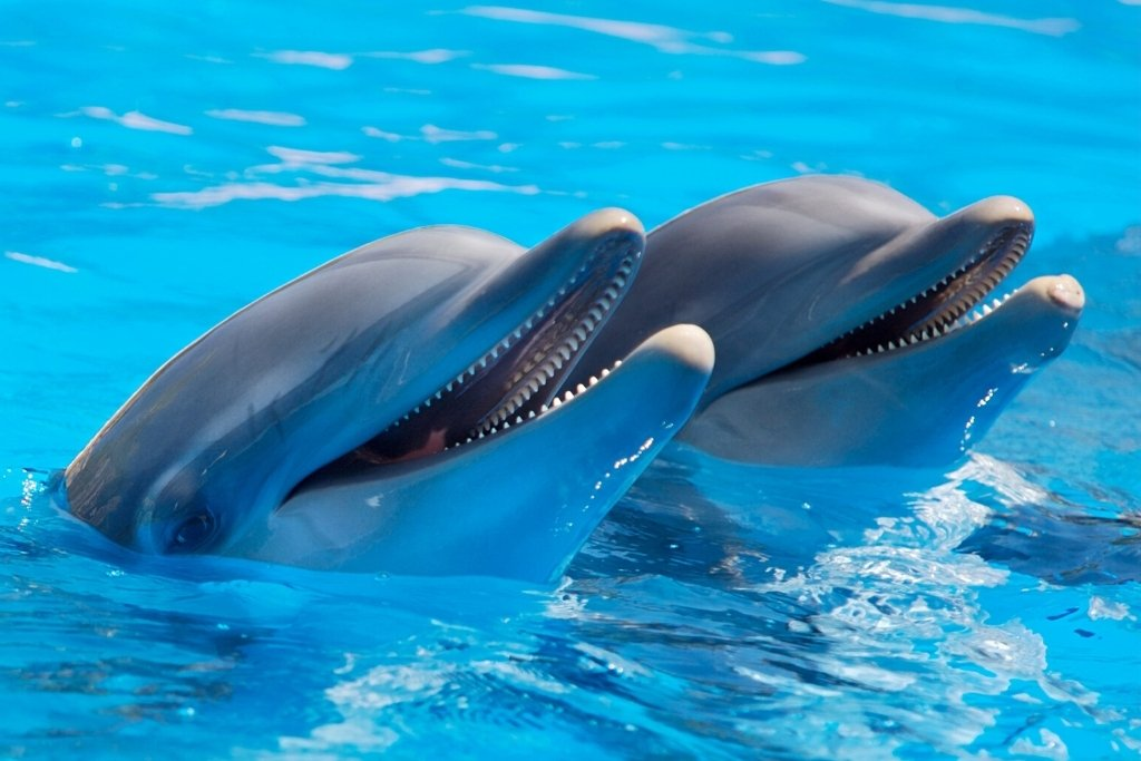 swimming with dolphins at Dolphin Quest Bermuda