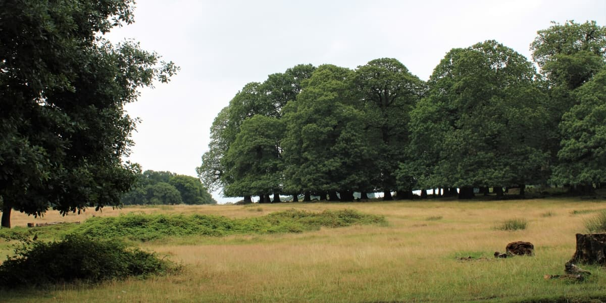 An open expanse of grass with trees in the background in Richmond Park
